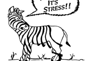 Stress Management Night!